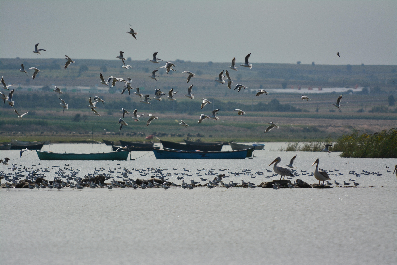 Manyas Gölünde kuşlar ve insanlar (Arif Terzioğlu)