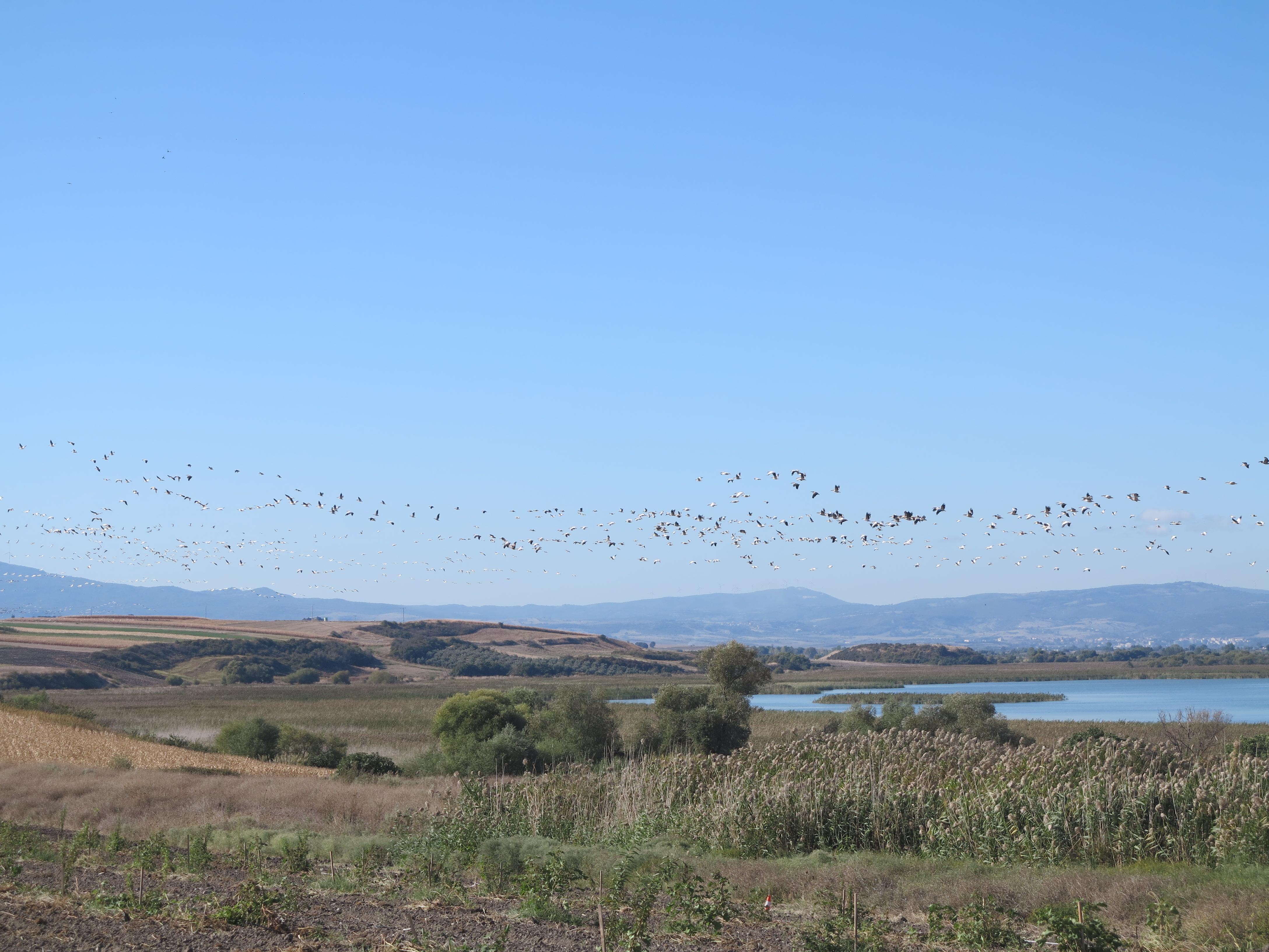 Manyas Gölü günümüzde Balıkesir'deki en önemli sulak alanlardan biridir. 2019 yılında alandan bir görünüm.